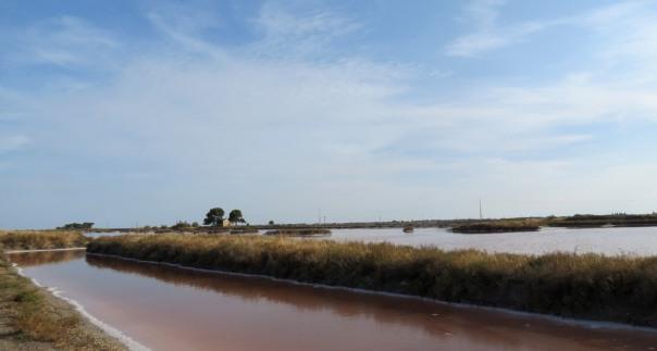 Location Sausset visite de la petite Camargue